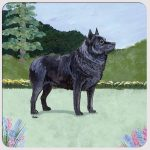 Schipperke Yard Scene Coasters Set of 4