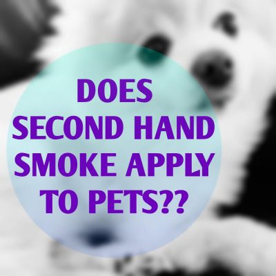 second-hand-smoke-and-pets-large