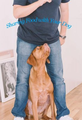 sharing-food-with-your-dog