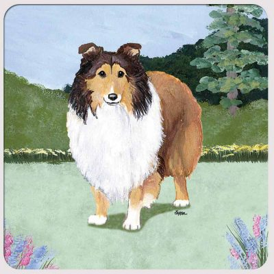 sheltie-coaster-yard-scene