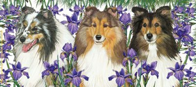 Sheltie Ceramic Mug Illustration