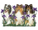 Sheltie Wooden Magnet Family