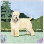Soft Coated Wheaten Yard Scene Coasters Set of 4
