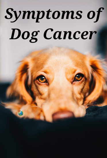 Symptoms of Dog Cancer