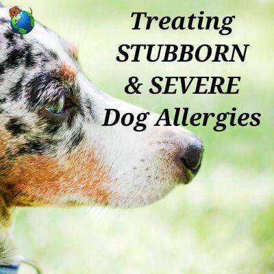 Treating Stubborn & Severe Dog Allergies