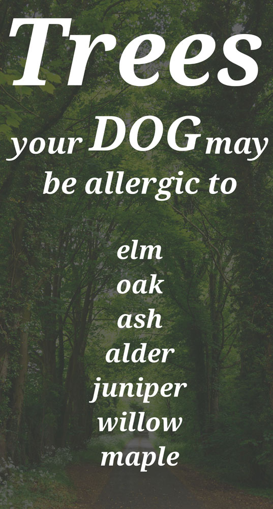 Dog Tree Allergies