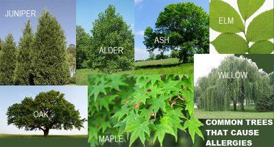 Seasonal Dog Allergies - Trees