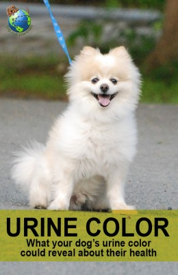 dog urine color