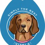 Vizsla Sticker 4×4″ 1