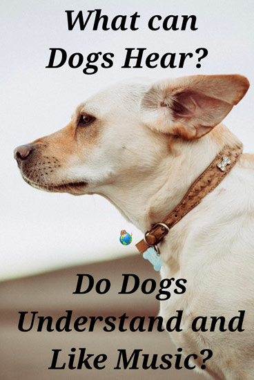 What Can Dogs Hear - Do They Like Music?