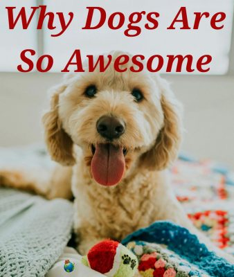 Why are Dogs so Awesome?