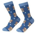 Yellow Lab Socks on Blue