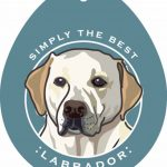Yellow Labrador Sticker 4×4″ 1